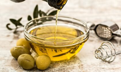 Olio nuovo, è scattata l'ora della raccolta